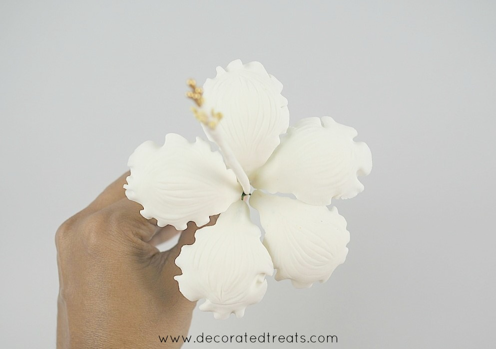 A white gum paste hibiscus held in hand