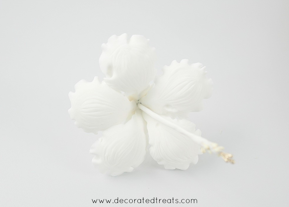 A white gum paste hibiscus