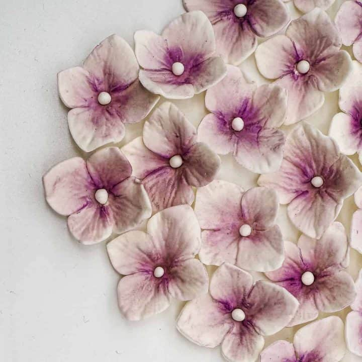 White and purple hydrangea flowers in a group