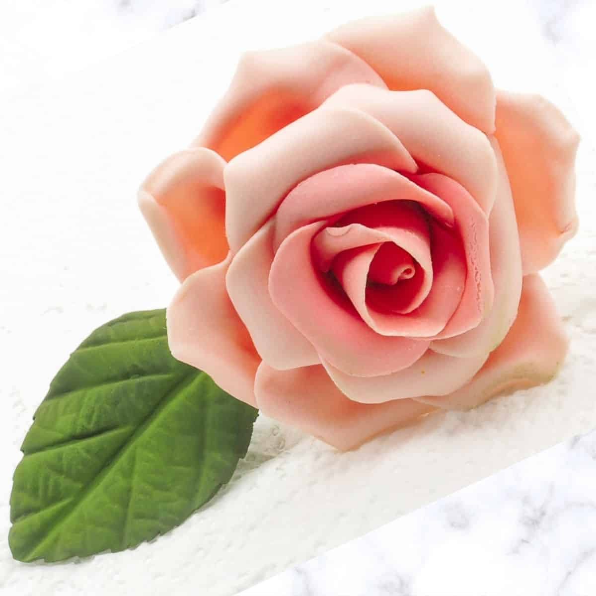 a pink gum paste rose against a marble background