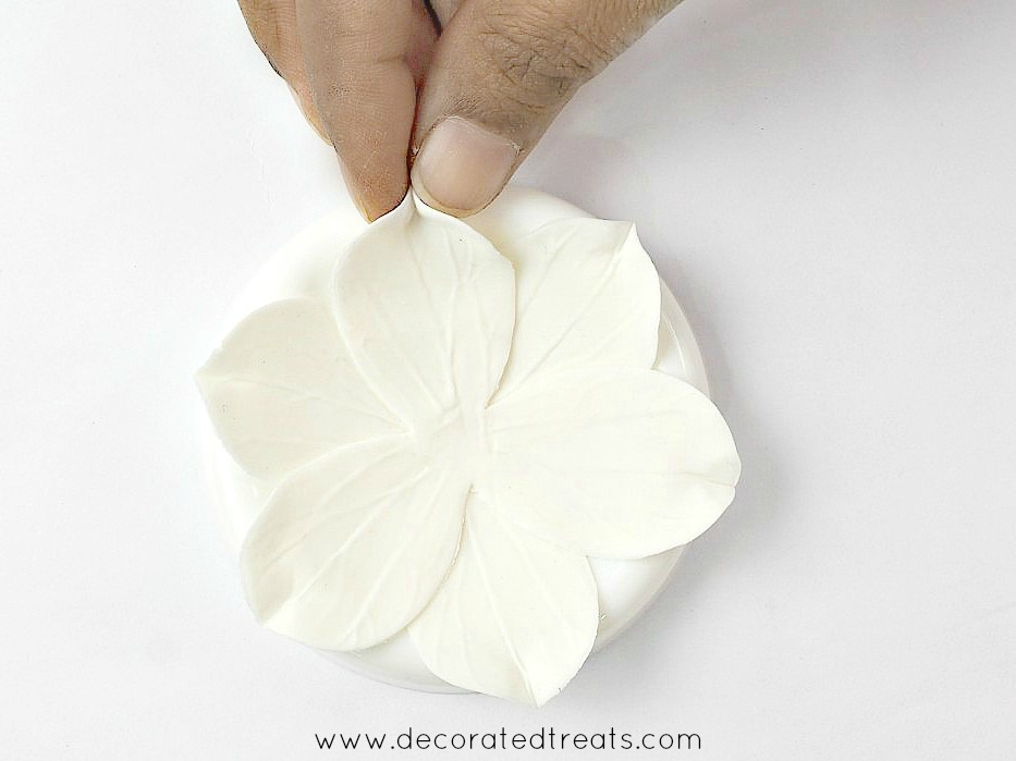 Pinching the ends of each gum paste petal