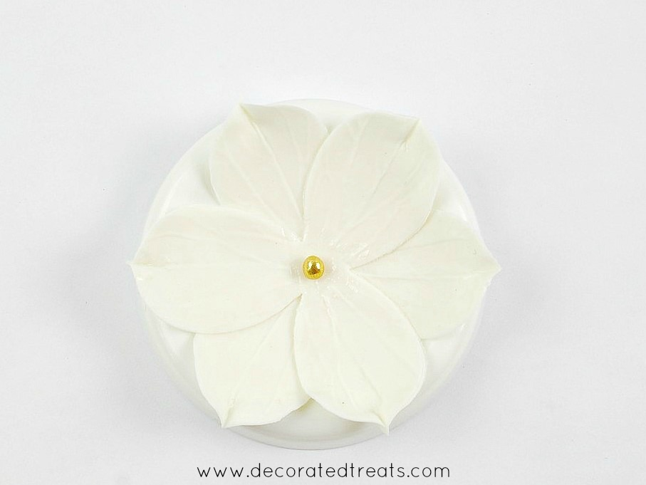 A 6 petals gum paste flower in white with gold bead center
