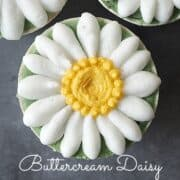Cupcakes decorated with white piped buttercream daisies