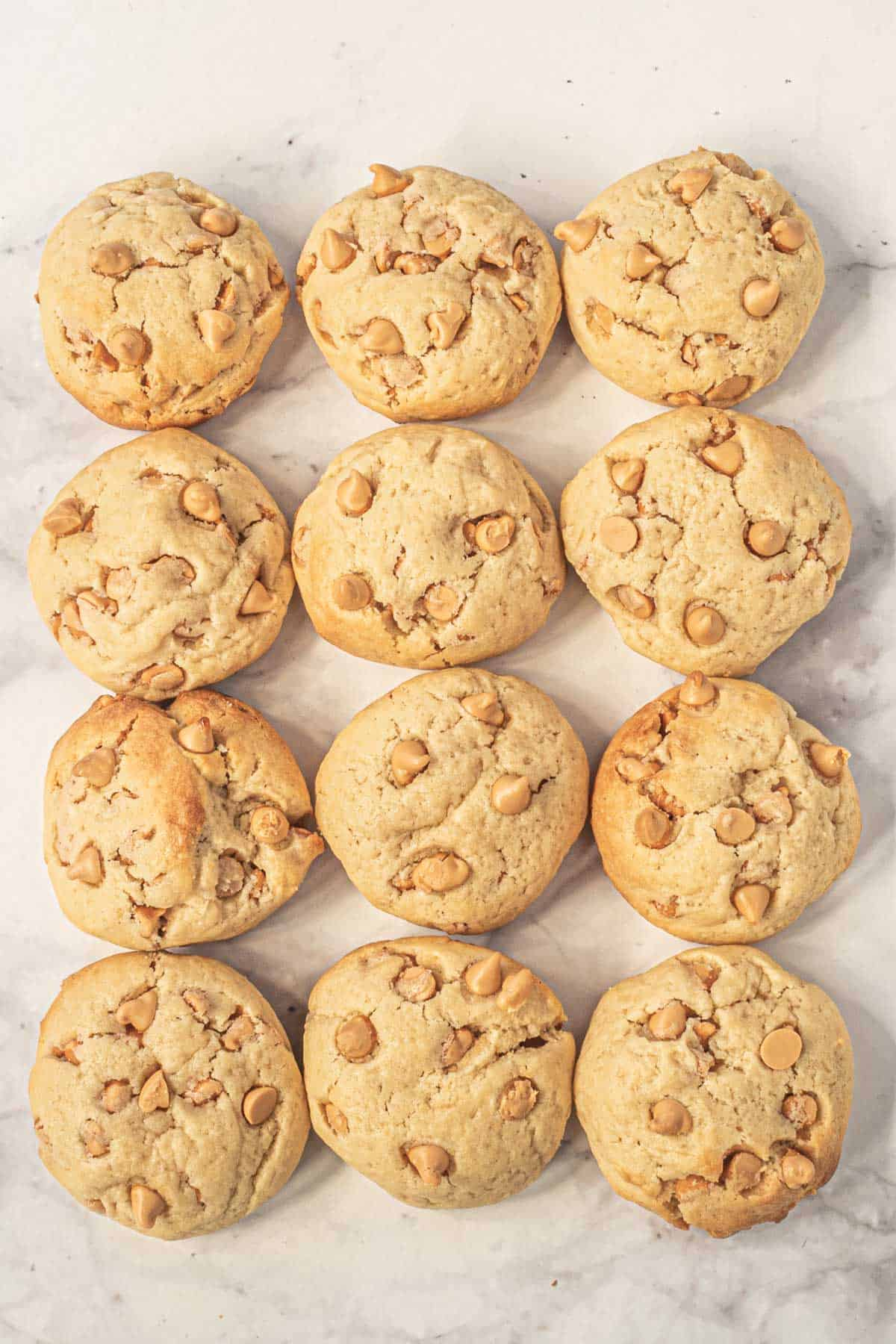Peanut butter cookies with butterscotch chips arranged in rows